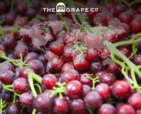 Screenshot van de website van the grape company gemaakt door NOBLY